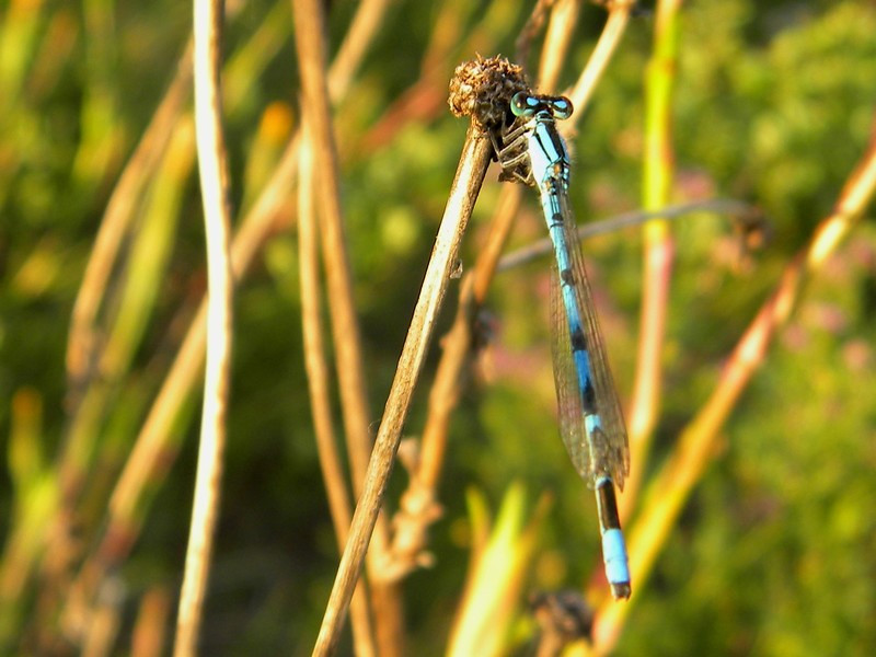 Williams Lake, Scout Island, dragonfly
