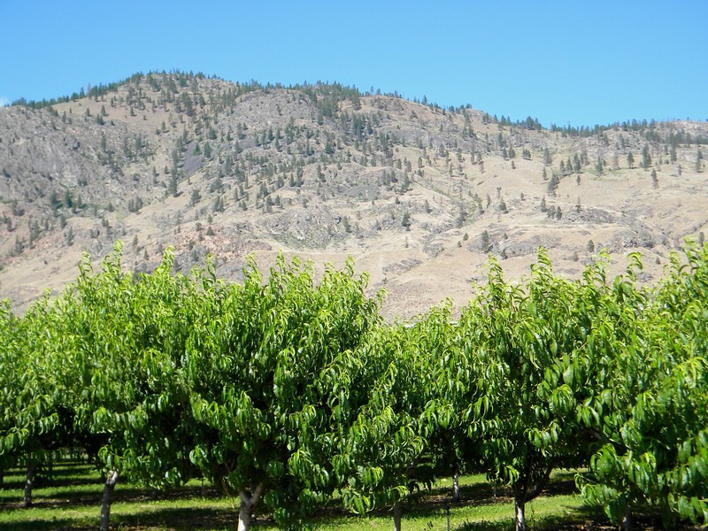 Osoyoos, fruitteelt in de Okanagan Valley